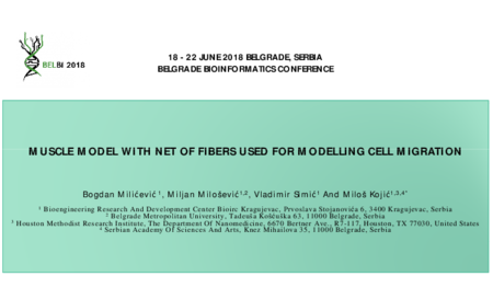 2.P2 Milicevic – Muscle model with net of fibers used for modelling cell migration